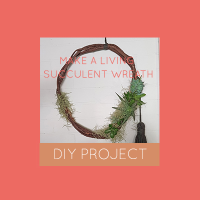 Make a living succulent wreath