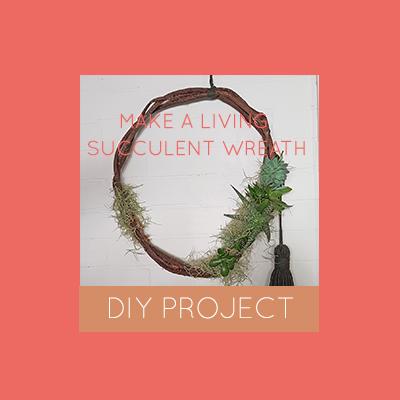 Make a living succulent wreath